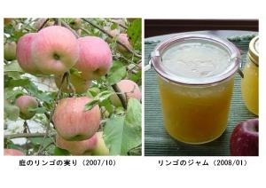 庭採りりんごのジャム