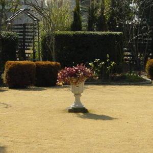 雨水の季を過ぎた冬の庭の様子