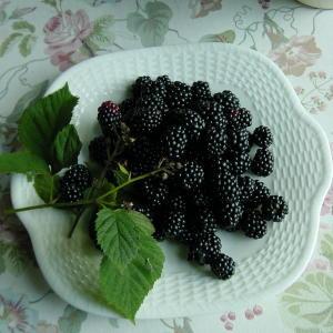 庭採りのブラックベリー