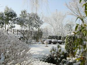 雪の降った朝の庭